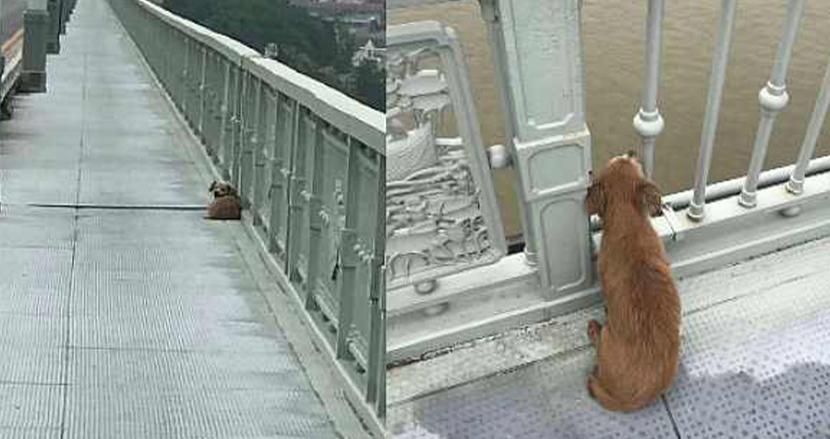 川に飛び込んで自ら命を絶ったご主人に会うため、橋の上で約1週間待ち続けた犬。健気な姿に胸打たれる