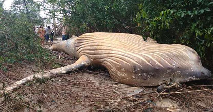 アマゾンのジャングルの中で、巨大なクジラが打ち上げられる! 専門家も困惑のミステリー